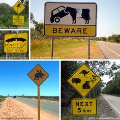 Australische Straßen sind offenbar sehr belebt! Australian roads seem to be roaring with all kinds of species! #australien #straßenschilder #outback #australia #roadsigns #animals #cassawaries #bush #downunder
