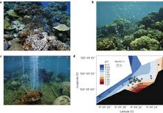 Losers and winners in coral reefs acclimatized to elevated carbon dioxide concentrations