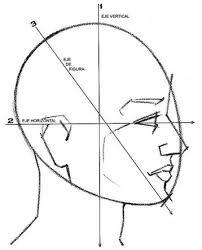 Resultado de imagen para como dibujar cabeza humano frente