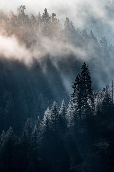 Mineral Ridge, Fog Lifting in Idaho Pan Handle National Forest, by Clifford Pugliese...... wild America Beauty Fog HDR Light Mist Mountain Nature Outdoor Sun Texture UnitedStates West american backlight beautiful cedar contrast detail dynamic east environment evergreen