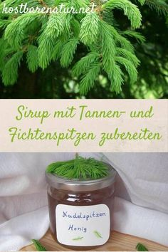 Tannen- und Fichtenspitzen-Sirup einfach zubereiten – köstlich In May, you can collect the bright green and very healthy tips of firs and spruces and process them into delicious foods, such as this syrup! Healing Herbs, Natural Healing, Apple Cider Vinegar Diet, Spruce Tips, Atkins Diet, Food Gifts, Diy Food, Tasty Dishes, Healthy Tips