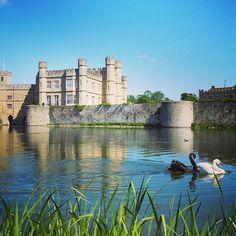 http://electroosmosisltd.co.uk #leedscastle #swans #blackswan #moat #lake #pond #water #nature #castle #history #travel #beautyful #beautyfulplace #trip #motorbiketrip #heritage #englishheritage #england #exploringbritain #romantic #placetovisit #visit #peace #love #couple #swanscouple #loveoldarchitecture #buildingconservation #Capturing_Britain