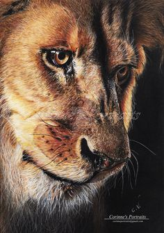 Lion by Sadness40.deviantart.com on @DeviantArt