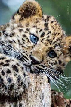 cute little fuzzball