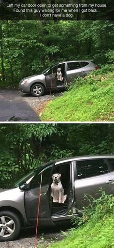 Left My Door Open cute animals dog puppy animal pets lol funny quotes funny animals Animals And Pets, Funny Animals, Cute Animals, Wild Animals, Baby Animals, I Love Dogs, Cute Dogs, Funny Animal Pictures, Funny Dogs