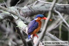 Malachite kingfisher! For more information on Uganda's wildlife, please visit our website.