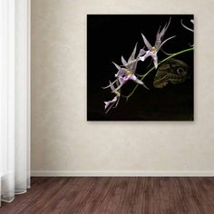 Trademark Fine Art Spider Orchid and Owl Eye Canvas Art by Kurt Shaffer, Size: 14 x 14, Multicolor