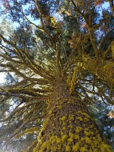 On a recent trip to the US, camping out at Mt. Shasta.. marvaling at the beauty of nature. Magical Tree, Natural Beauty, Camping, Nature, Campsite, Naturaleza, Nature Illustration, Off Grid, Campers
