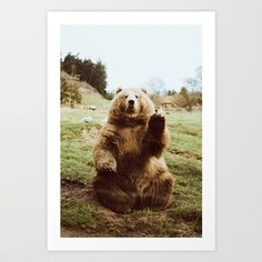 Friendly bear waving hello at the Olympic Game Farm in Washington.<br/> <br/> bear, washington, olympic, game...