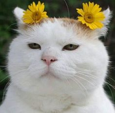 shiro the cat flowers Cute Cats And Kittens, I Love Cats, Crazy Cats, Cool Cats, Kittens Cutest, Cute Baby Animals, Funny Animals, Costume Chat, Cat Flowers