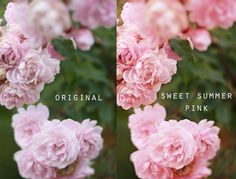 Free overlays from Magic And Light Collection.  Sweet Summer Pink And Lilac Woods!  Transform your photos quickly and easily with only a couple of clicks!  Easy for beginners and those already familiar with Photoshop and Photoshop Elements.  This is a great photo editing tool!