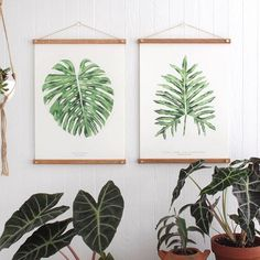 """S a l e !! Use code YAY40 to take 40% off! Working on a new round of prints to be released in the next week. I have 25 each of the Monstera Lacy Tree Philodendron and Southern Maidenhair prints left in my shop! All orders will also include a 3""""x3"""" letterpressed monstera too Can't wait to show you guys my new studio once finished the custom table by @ucreativething was delivered today and the whole space is just coming along so nicely!"""