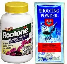 home made: Rooting Hormone