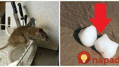 Toto zaženie myši a ďalšiu háveď ďaleko od vášho domu: Len uložíte na zem a viac sa viac sa nestaráte – efektný vydrží mesiace! Home Hacks, Gardening, Tips, Household Tips, Garten, Lawn And Garden, Horticulture