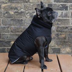 Items similar to The Latch - Adult Boys French Bulldog/Pug Winter Dog Coat on Etsy Cãezinhos Bulldog, Dog Winter Coat, Pets 3, Raining Cats And Dogs, Boy Dog, Dog Sweaters, Animal Quotes, Dog Coats, Dogs Of The World