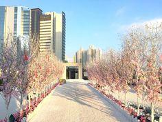 堅。離地城: 【新春好去處】D2 Place天台桃花陣 粉紅祈福許願樹