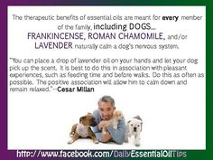 essential oils for dogs Essential Oils Dogs, Doterra Essential Oils, Young Living Essential Oils, Young Living Pets, Dog Whisperer, Cesar Millan, Oils For Dogs, Living Oils, Dog Care
