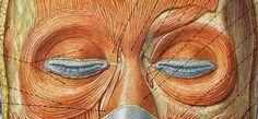 oczy anatomia