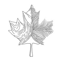 Canadian Maple Leaf Colouring Page 5929
