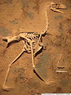 New Species Of 'Terror Bird' Discovered In Argentina  http://www.huffingtonpost.com/2015/04/10/terror-bird-fossil-discovered_n_7040716.html?ir=Weird+News&ncid=fcbklnkushpmg00000022