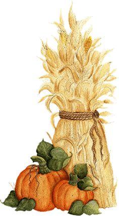 corn stalk and pumpkins