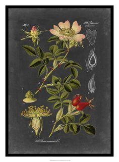 Midnight Botanical I Giclee Print by Vision Studio at Art.com