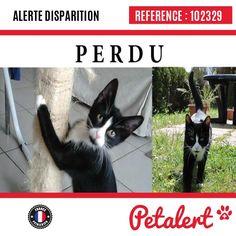 Cette Alerte est désormais close : elle n'est donc plus visible sur la plate-forme www.petalert.fr.  Merci pour votre aide.