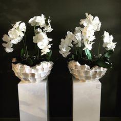 Beautiful Flower Arrangements, Beautiful Flowers, Orchids, New Homes, Room Decor, Vase, Interior Design, The Originals, Girls