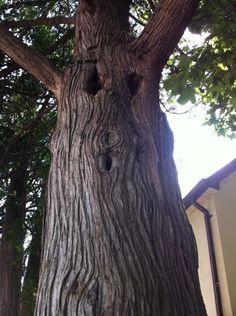 one freaky looking tree