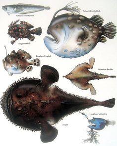 Fish  Atlantic Footbalfish Longlure Frogfish от mysunshinevintage, $10.00