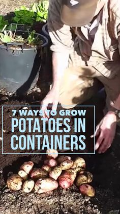 One of the best way to get a terrific harvest of potatoes is to grow them in a container. Here are 7 different methods of growing potato plants in your vegetable garden in containers.