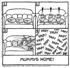 (via Off the Leash Dog cartoons - It's Mummy)