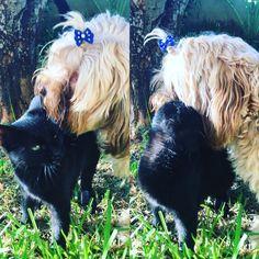 perro adopta a gato