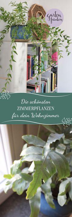 Entdecke die schönsten Zimmerpflanzen für dein Wohnzimmer. Jetzt Inspirationen sammeln und zum Zimmerpflanzen Fan werden