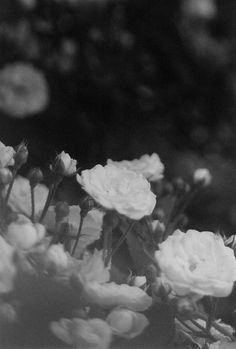 ☾ Midnight Dreams ☽ dreamy dramatic black and white photography - night blooms
