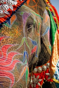 The Indian Holi Festival is so cool! Ever since I got interested in India, I've had a yearning to go to the Holi festival. Holi Festival India, Holi Festival Of Colours, Elephant Walk, Elephant Love, Elephant Parade, The World Race, Indian Elephant, Elephant India, Elephants In India