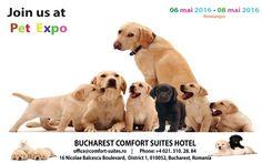 Bucharest Comfort Suites in București - Official Website. National Theatre, Happy Animals, Bucharest, Business Travel, Romania, Great Deals, Labrador Retriever, Pets, Labrador Retrievers
