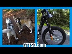 URBAN MUSHING | Dog Sledding with NO SNOW | Scootering Bikjoring with your dog - YouTube