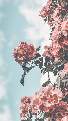 12 Floral iPhone Xs Wallpapers To Celebrate Spring Preppy Wallpapers is part of Preppy wallpaper - Who doesn't love a pretty floral iPhone X Wallpaper Let's celebrate Spring together and get yourself a cute new iPhone Wallpaper today! Flor Iphone Wallpaper, Iphone Background Wallpaper, Tumblr Wallpaper, Aesthetic Iphone Wallpaper, Nature Wallpaper, Aesthetic Wallpapers, Wallpaper Murals, Wallpaper Wallpapers, Wallpapers Tumblr