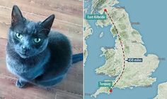 Goodbye Norma Jean: Pet owner is devastated after cat she took in NINE years ago thinking