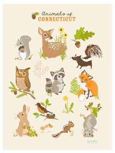 Animals in Connecticut by SeaUrchinStudio on Etsy