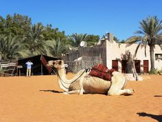 The Heritage village in Abu Dhabi, the throwback - tipntrips Travel Destinations, Travel Tips, United Arab Emirates, Abu Dhabi, Trips, Vacation, Outdoor Decor, Holiday, Animals