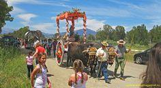 Romería de Villafranco del Guadalhorce, a Romeria is a religious pilgrimage and a big party. Andalusia, Countryside, Animals, Beautiful, Sevilla Spain, Animales, Animaux, Animal, Animais