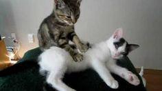 Kitten Massage Therapy, via YouTube.
