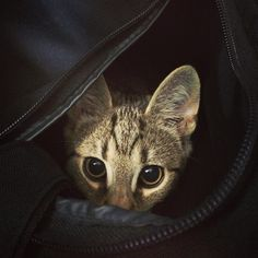 Cute Overload : My kitten didn't want me to go to work alone.