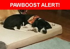 Please spread the word! Little Ann  was last seen in Albuquerque, NM 87121.  Description: Female 5 month old Great Dane black and white the white on her face is on the right side with a white spot on the top of her head and black spots on her belly.  Nearest Address: Near coors