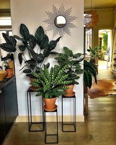 58 DIY Plant Stand ideas to Fill Your Living Room With Green.- 58 DIY Plant Stand ideas to Fill Your Living Room With Greenery living room decoration, plant stand decor, greenery decoration, plants indoor living room - Plantas Indoor, House Plants Decor, Living Room Decor With Plants, Indoor Plant Decor, Living Rooms, Indoor Plant Stands, Bedroom Plants Decor, Big Indoor Plants, Easy House Plants