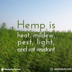 Hemp's potential for products is endless.  Make Hemp be a part of your everyday.