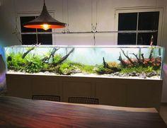 Amazing work by Think Fish from Dubai. Layout powered by Aquaflora plants. #Aquaflora #Aquascaping #planted #aquarium #aquatic #plant #freshwater #plantedtank #aquascape #plantedaquarium #ThinkFish #Dubai