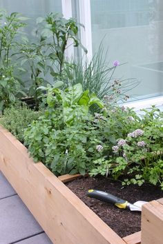 Urban Growing   Victory Gardens